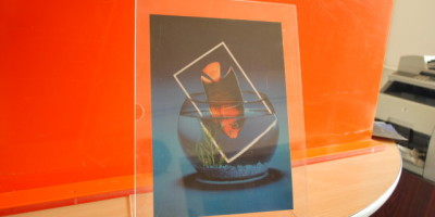L display A4